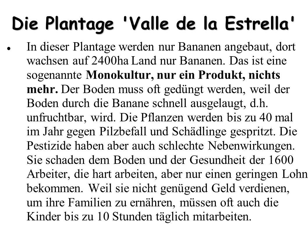 Die Plantage 'Valle de la Estrella' In dieser Plantage werden nur Bananen angebaut, dort wachsen auf 2400ha Land nur Bananen. Das ist eine sogenannte