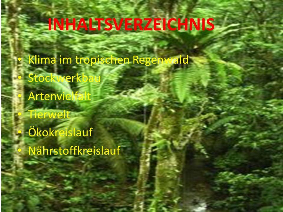 Klima im tropischen Regenwald Stockwerkbau Artenvielfalt Tierwelt Ökokreislauf Nährstoffkreislauf INHALTSVERZEICHNIS