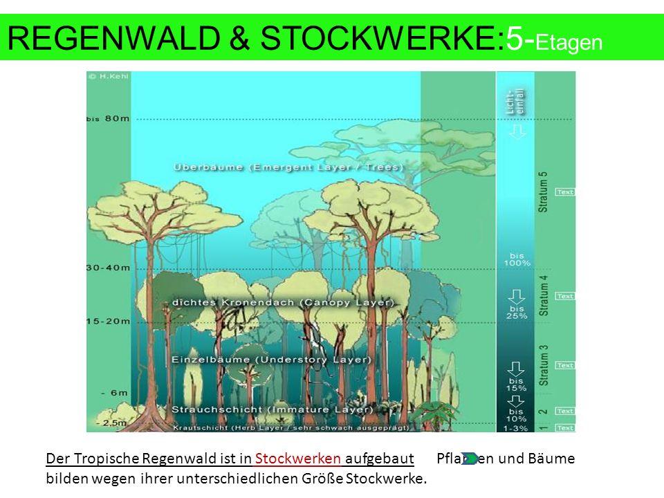Der Tropische Regenwald ist in Stockwerken aufgebaut Pflanzen und Bäume bilden wegen ihrer unterschiedlichen Größe Stockwerke.