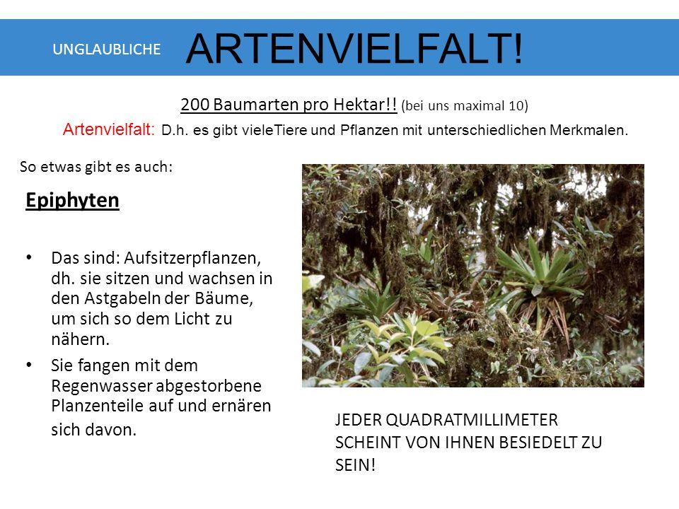 Epiphyten Das sind: Aufsitzerpflanzen, dh.