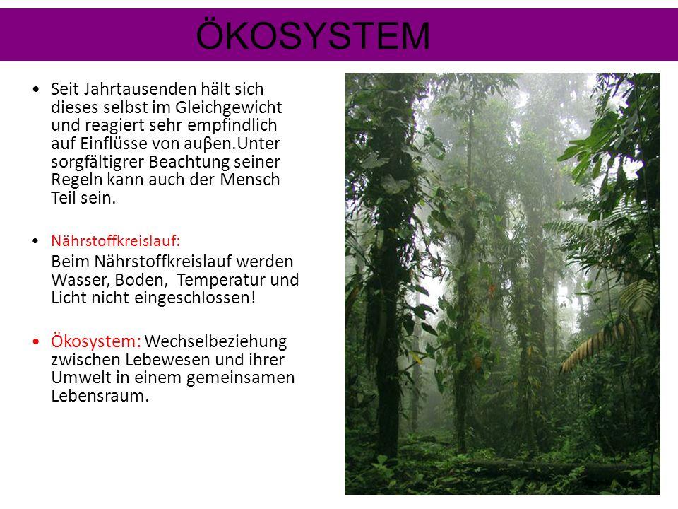 Auch die TIERWELT ist an das Leben im Kronendach der Bäume angepasst. Viele können: KLETTERN: Krallen,Greifschwänze oder Saugnäpfe ermöglichen es ihne