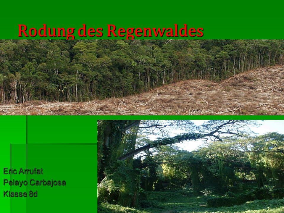 Rodung des Regenwaldes Eric Arrufat Pelayo Carbajosa Klasse 8d