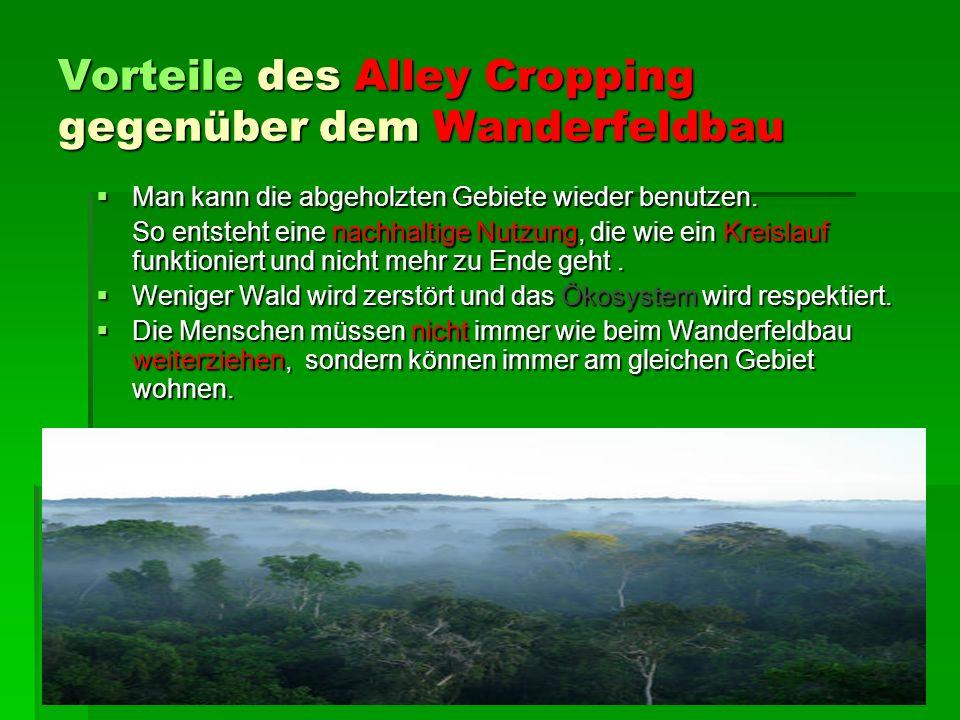 Vorteile des Alley Cropping gegenüber dem Wanderfeldbau Man kann die abgeholzten Gebiete wieder benutzen.
