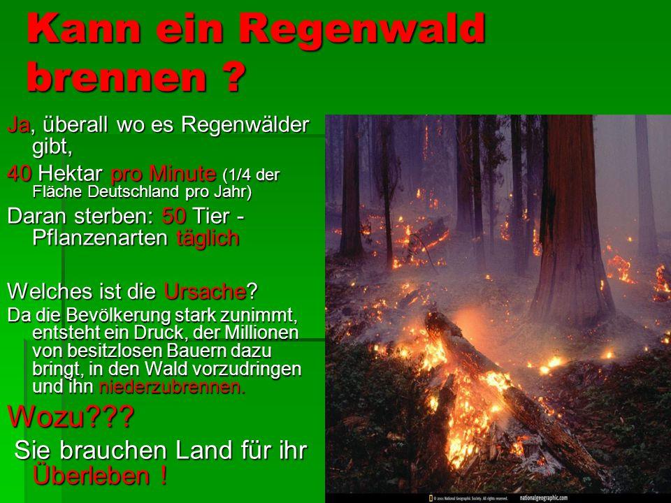 Kann ein Regenwald brennen .