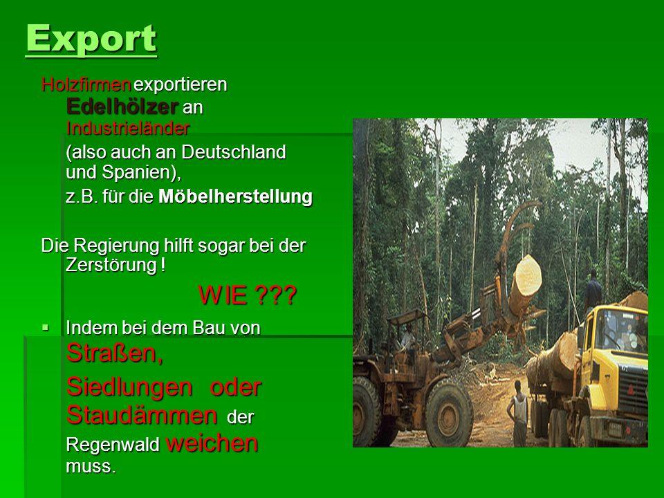 Export Holzfirmen exportieren Edelhölzer an Industrieländer (also auch an Deutschland und Spanien), z.B.