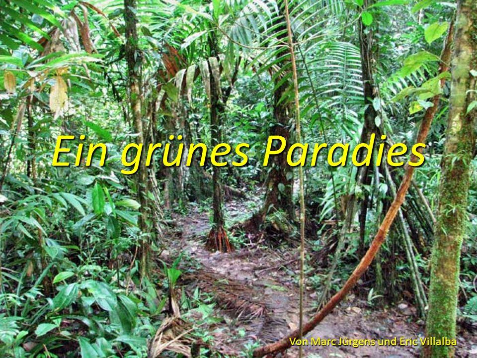 Ein grünes Paradies Von Marc Jürgens und Eric Villalba