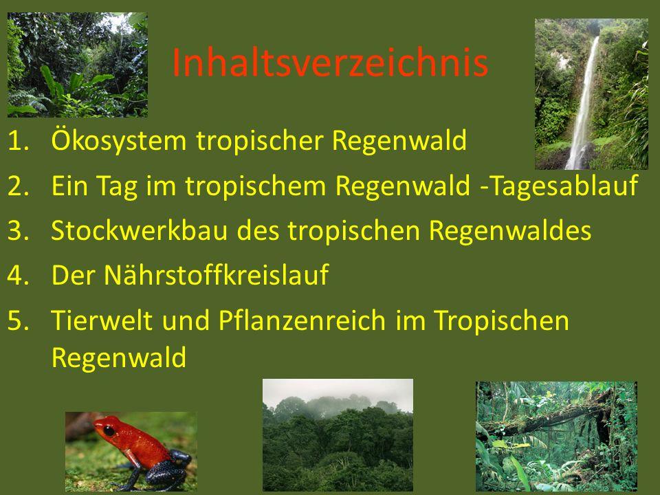Inhaltsverzeichnis 1.Ökosystem tropischer Regenwald 2.Ein Tag im tropischem Regenwald -Tagesablauf 3.Stockwerkbau des tropischen Regenwaldes 4.Der Näh