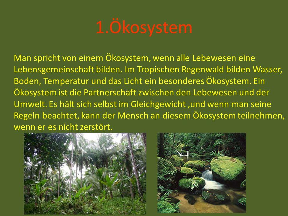 1.Ökosystem Man spricht von einem Ökosystem, wenn alle Lebewesen eine Lebensgemeinschaft bilden. Im Tropischen Regenwald bilden Wasser, Boden, Tempera
