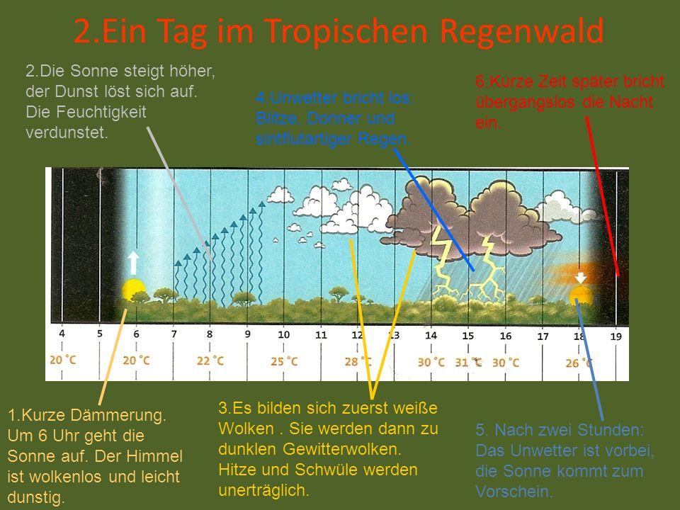 2.Ein Tag im Tropischen Regenwald 1.Kurze Dämmerung. Um 6 Uhr geht die Sonne auf. Der Himmel ist wolkenlos und leicht dunstig. 2.Die Sonne steigt höhe