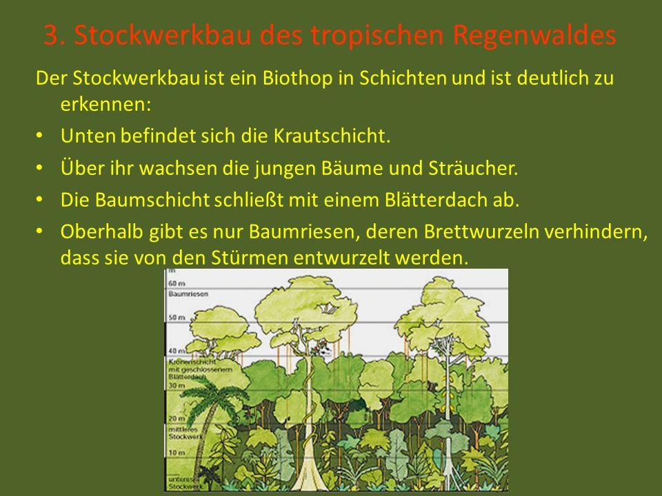 3. Stockwerkbau des tropischen Regenwaldes Der Stockwerkbau ist ein Biothop in Schichten und ist deutlich zu erkennen: Unten befindet sich die Krautsc