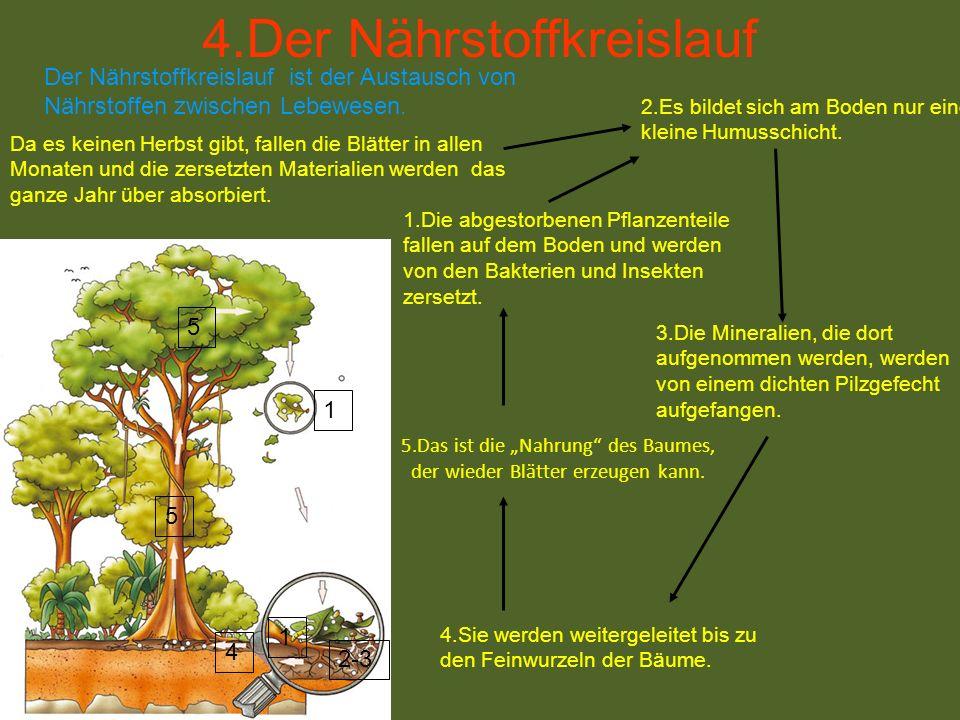 5.Das ist die Nahrung des Baumes, der wieder Blätter erzeugen kann. 1.Die abgestorbenen Pflanzenteile fallen auf dem Boden und werden von den Bakterie