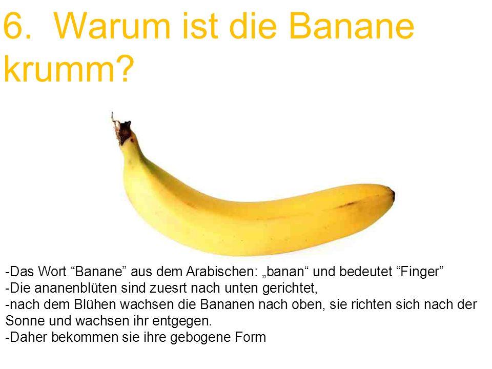 6. Warum ist die Banane krumm? -Das Wort Banane aus dem Arabischen: banan und bedeutet Finger -Die ananenblüten sind zuesrt nach unten gerichtet, -nac