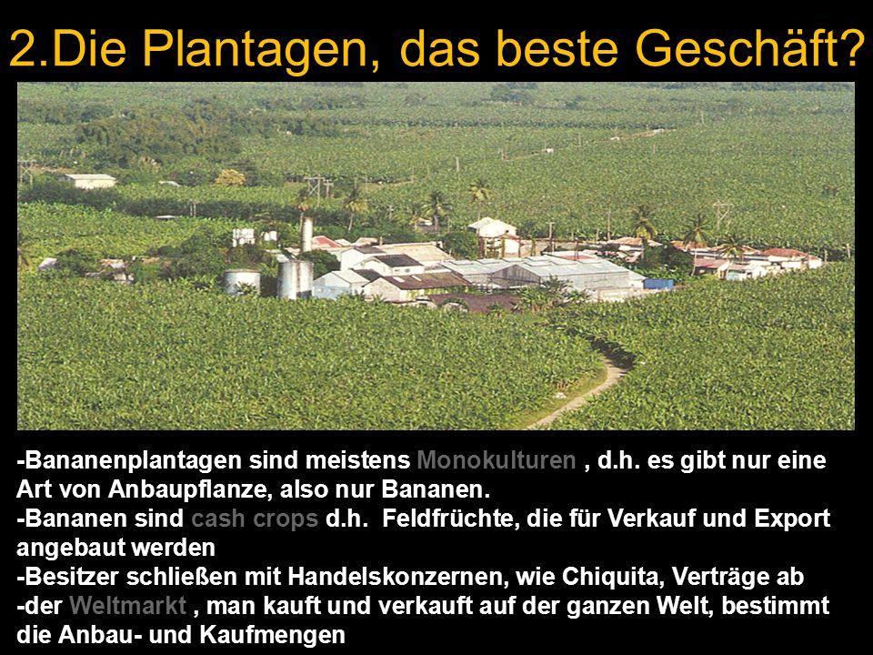 2.Die Plantagen, das beste Geschäft? -Bananenplantagen sind meistens Monokulturen, d.h. es gibt nur eine Art von Anbaupflanze, also nur Bananen. -Bana
