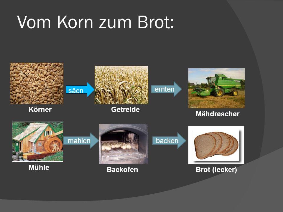 Vom Korn zum Brot: ernten mahlenbacken säen KörnerGetreide Mähdrescher Mühle BackofenBrot (lecker) säen