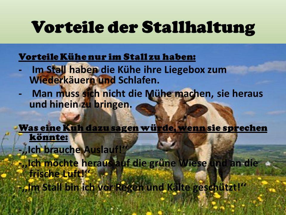 Vorteile der Stallhaltung Vorteile Kühe nur im Stall zu haben: - Im Stall haben die Kühe ihre Liegebox zum Wiederkäuern und Schlafen. - Man muss sich