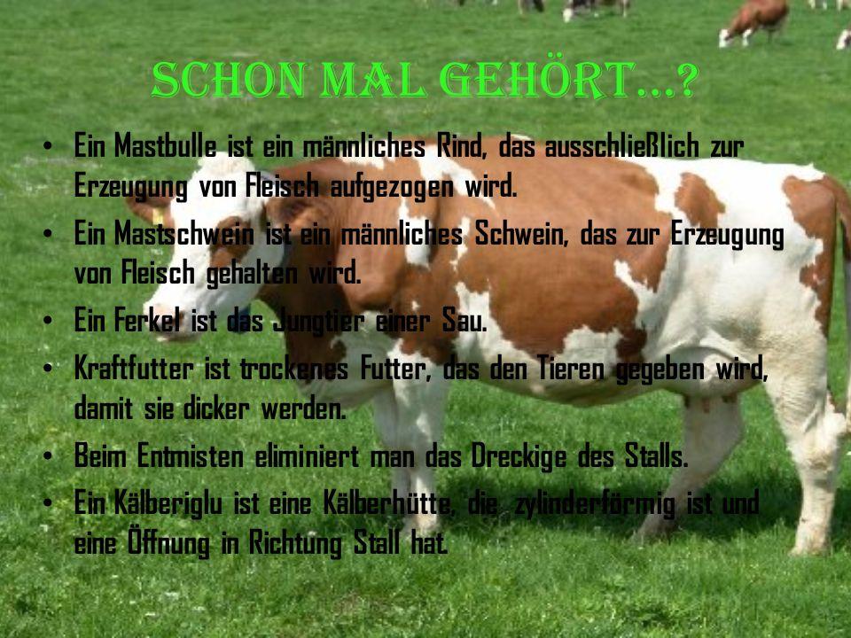Täglich Fleisch?? Schon mal gehört...? Aus demLeben desBauern Wester-Ebbinghaus Probleme der Massentierhaltung Wir oder die Bauern?