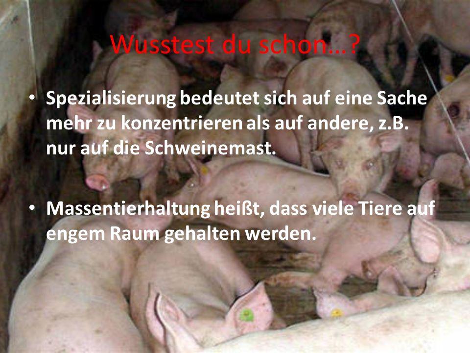 Schon mal gehört…? Ein Mastbulle ist ein männliches Rind, das ausschließlich zur Erzeugung von Fleisch aufgezogen wird. Ein Mastschwein ist ein männli