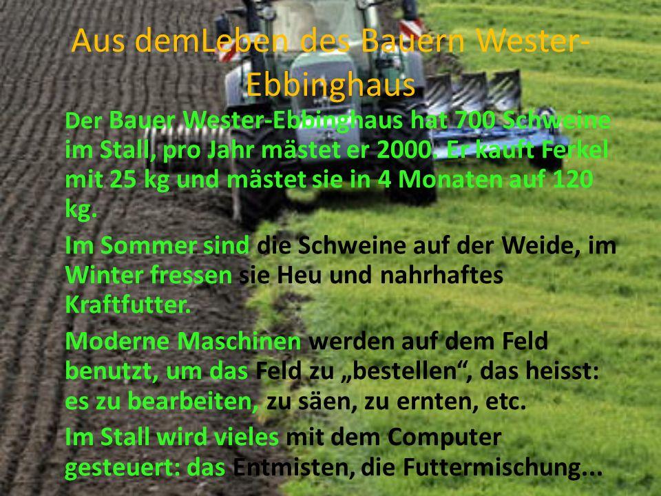 Aus demLeben des Bauern Wester- Ebbinghaus Der Bauer Wester-Ebbinghaus hat 700 Schweine im Stall, pro Jahr mästet er 2000.