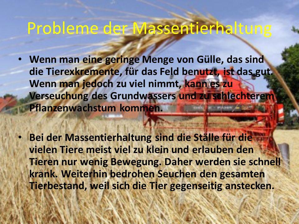 Probleme der Massentierhaltung Wenn man eine geringe Menge von Gülle, das sind die Tierexkremente, für das Feld benutzt, ist das gut.