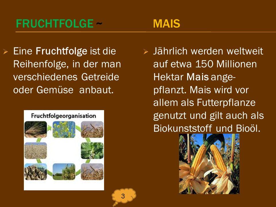 FRUCHTFOLGE ~ MAIS Eine Fruchtfolge ist die Reihenfolge, in der man verschiedenes Getreide oder Gemüse anbaut. 3 Jährlich werden weltweit auf etwa 150