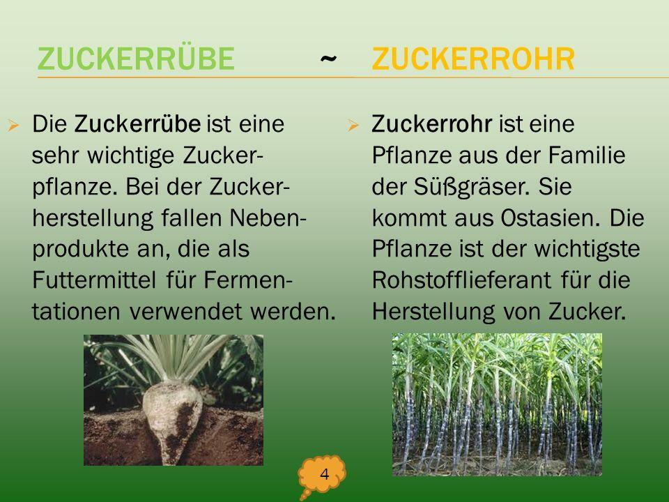 ZUCKERRÜBE ~ ZUCKERROHR Die Zuckerrübe ist eine sehr wichtige Zucker- pflanze. Bei der Zucker- herstellung fallen Neben- produkte an, die als Futtermi