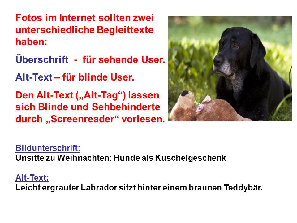 Bildunterschrift: Unsitte zu Weihnachten: Hunde als Kuschelgeschenk Alt-Text: Leicht ergrauter Labrador sitzt hinter einem braunen Teddybär.