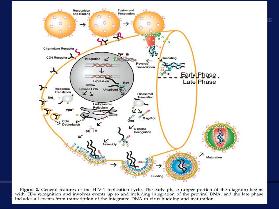 HIV HIV benutzt eine menschliche Zelle zur Vermehrung Die infizierte Zelle schneidet kleine Stücke der HIV Proteine ab und transportiert sie an die Oberfläche Killer-T-Zellen erkennen fremde Proteinmuster an der Oberfläche und zerstören infizierte Zellen Impfstoffe bereiten die T-Zellen darauf vor bestimmte Muster zu attackieren