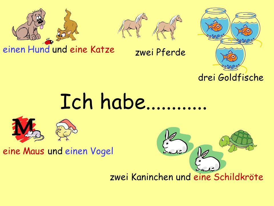 Ich habe............ einen Hund und eine Katze drei Goldfische zwei Kaninchen und eine Schildkröte eine Maus und einen Vogel zwei Pferde