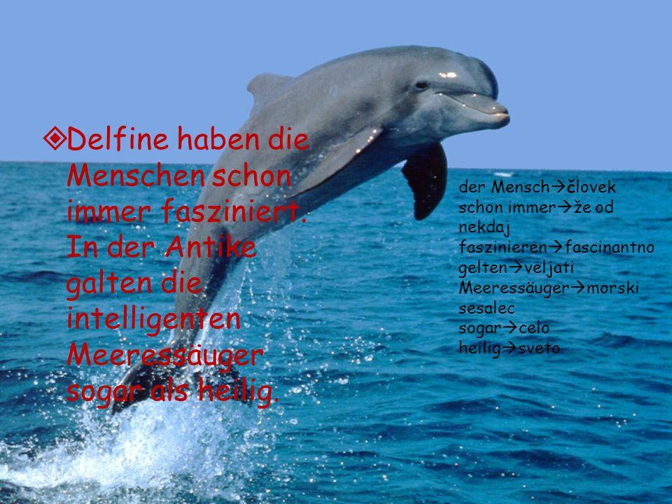 Delfine haben die Menschen schon immer fasziniert. In der Antike galten die intelligenten Meeressäuger sogar als heilig. der Mensch človek schon immer