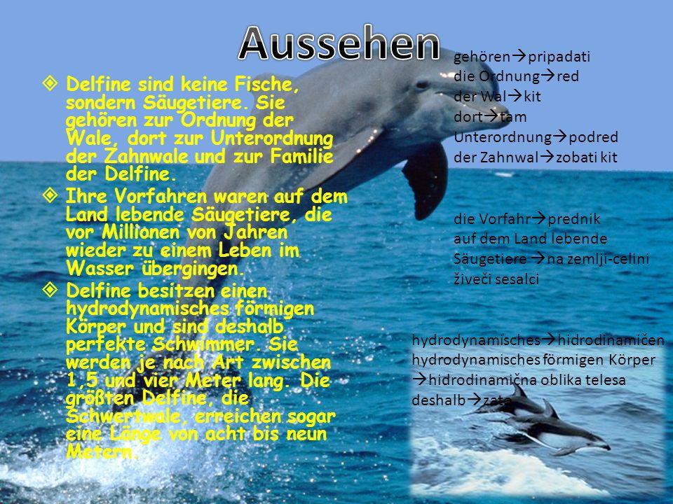 Delfine sind keine Fische, sondern Säugetiere. Sie gehören zur Ordnung der Wale, dort zur Unterordnung der Zahnwale und zur Familie der Delfine. Ihre