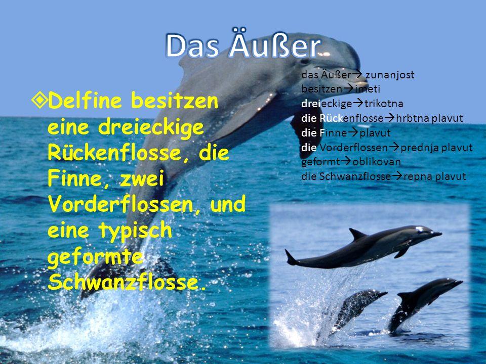Delfine besitzen eine dreieckige Rückenflosse, die Finne, zwei Vorderflossen, und eine typisch geformte Schwanzflosse. das Äußer zunanjost besitzen im