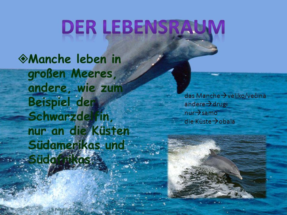 Manche leben in großen Meeres, andere, wie zum Beispiel der Schwarzdelfin, nur an die Küsten Südamerikas und Südafrikas. das Manche veliko/večina ande