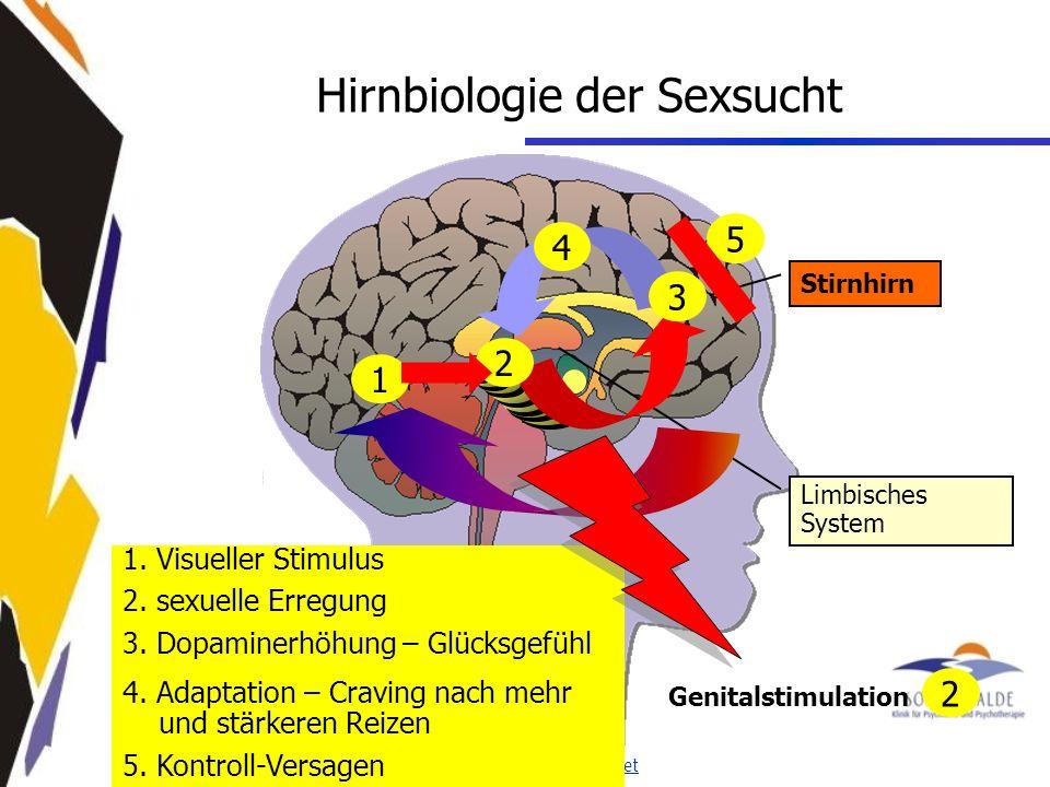 www.seminare-ps.net 1.Visueller Stimulus 2. sexuelle Erregung 3.