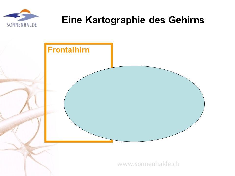 Eine Kartographie des Gehirns Frontalhirn
