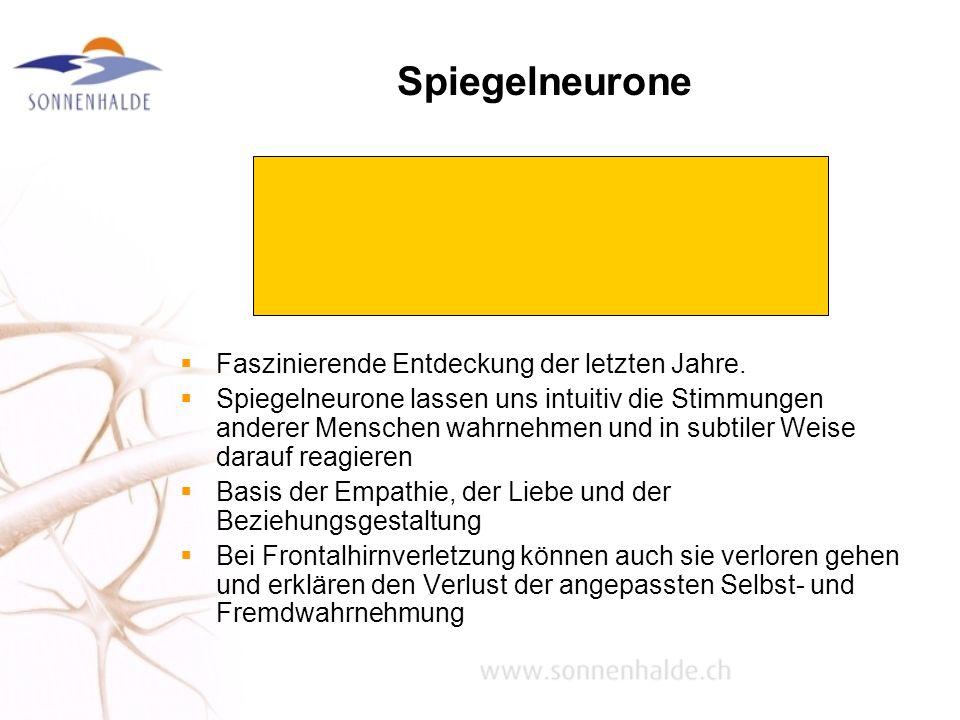 Spiegelneurone Faszinierende Entdeckung der letzten Jahre. Spiegelneurone lassen uns intuitiv die Stimmungen anderer Menschen wahrnehmen und in subtil