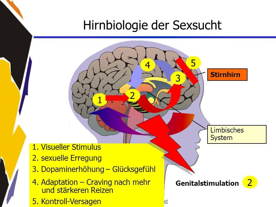 www.seminare-ps.net 1. Visueller Stimulus 2. sexuelle Erregung 3. Dopaminerhöhung – Glücksgefühl 4. Adaptation – Craving nach mehr und stärkeren Reize