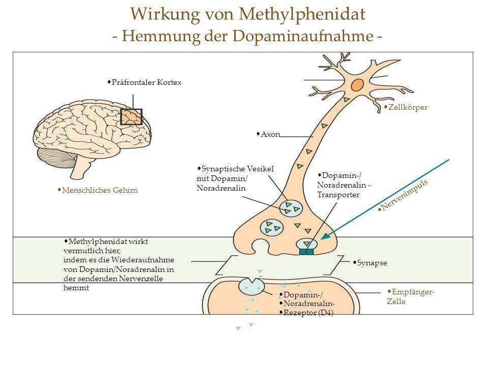 Wirkung von Methylphenidat - Hemmung der Dopaminaufnahme - Methylphenidat wirkt vermutlich hier, indem es die Wiederaufnahme von Dopamin/Noradrenalin