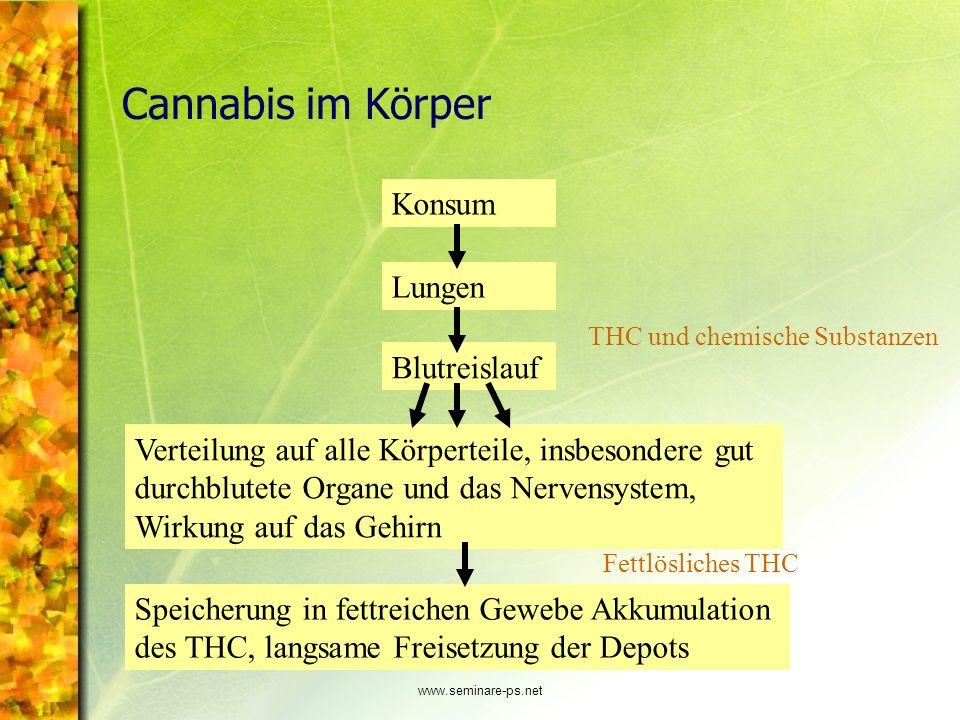 www.seminare-ps.net Cannabis im Körper Konsum Lungen Blutreislauf Verteilung auf alle Körperteile, insbesondere gut durchblutete Organe und das Nerven