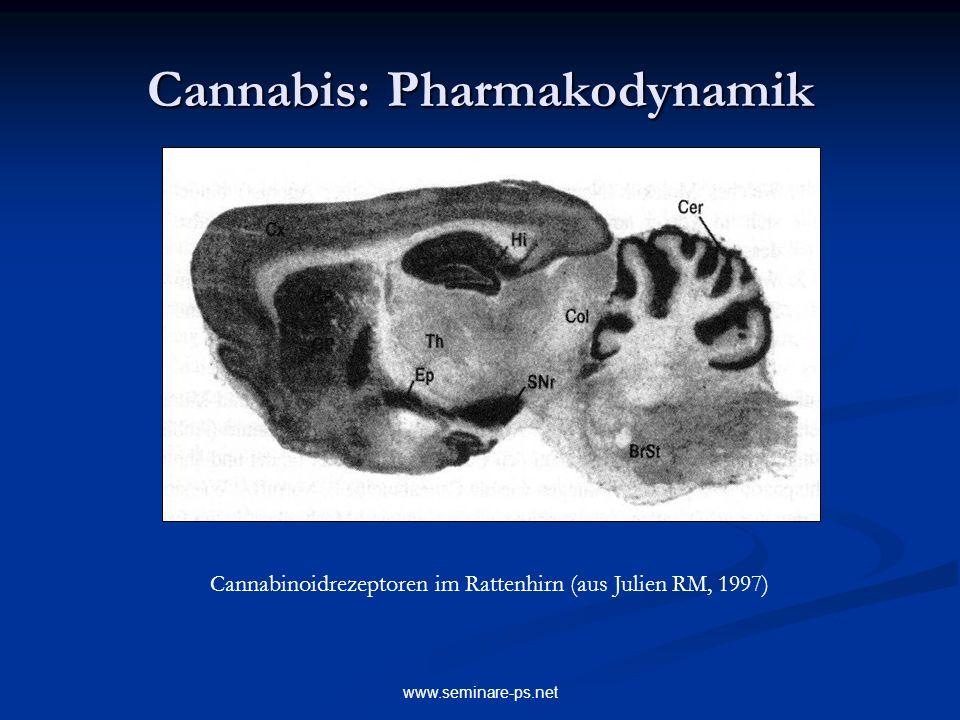 www.seminare-ps.net Cannabis: Pharmakodynamik Cannabinoidrezeptoren im Rattenhirn (aus Julien RM, 1997)