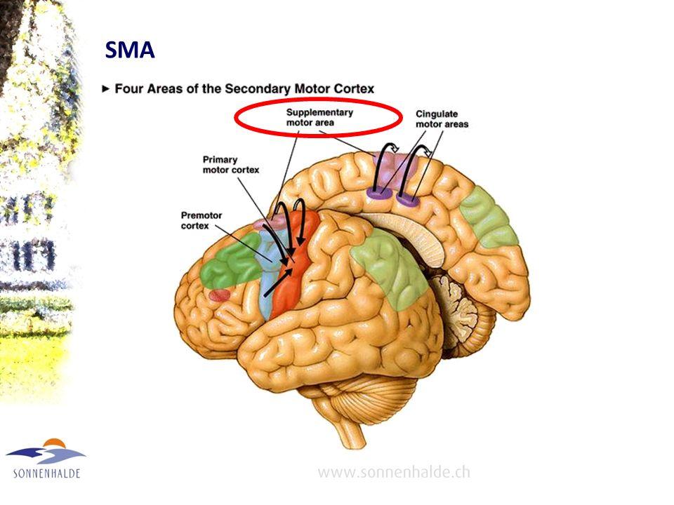 Supplementary Motor Area (SMA) Liegt im Bereich des Vertex, hat sich aus dem limbischen System entwickelt und hat Verbindung zum Gyrus cinguli. Elektr