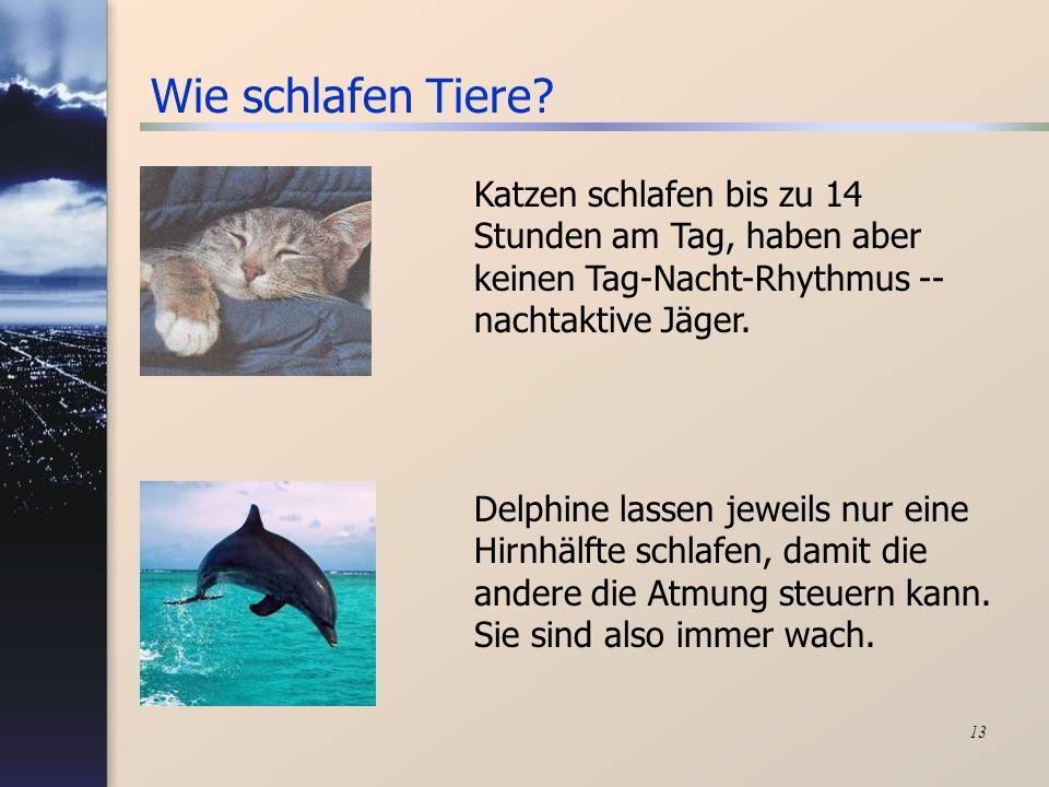 13 Wie schlafen Tiere? Delphine lassen jeweils nur eine Hirnhälfte schlafen, damit die andere die Atmung steuern kann. Sie sind also immer wach. Katze