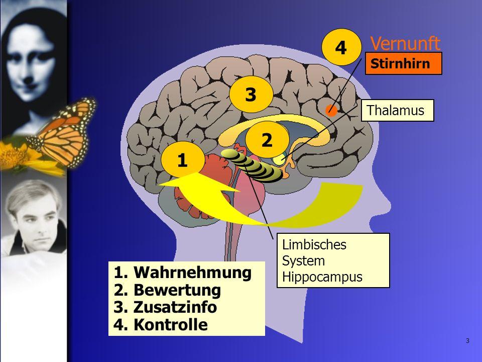 3 1. Wahrnehmung 2. Bewertung 3. Zusatzinfo 4. Kontrolle 3 Thalamus Limbisches System Hippocampus 2 Vernunft Stirnhirn 41