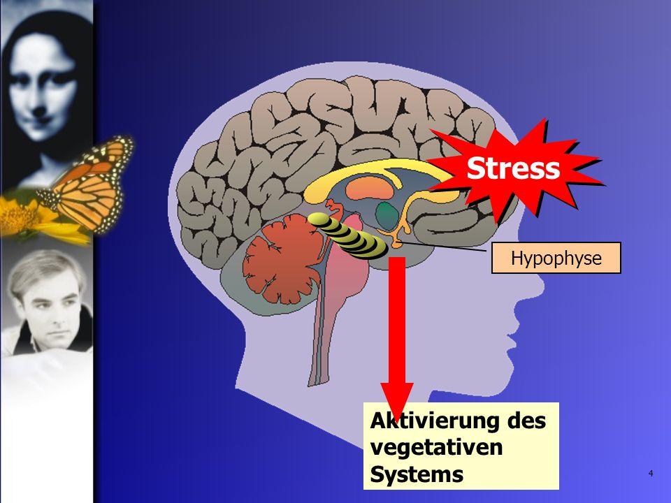 4 Hypophyse Stress Aktivierung des vegetativen Systems