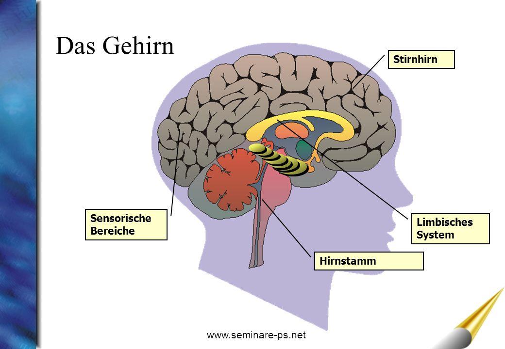 www.seminare-ps.net Limbisches System Stirnhirn Sensorische Bereiche Hirnstamm Das Gehirn