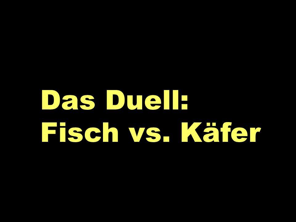 Das Duell: Fisch vs. Käfer Das Duell