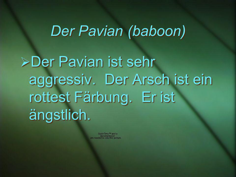 Der Pavian (baboon) Der Pavian ist sehr aggressiv.