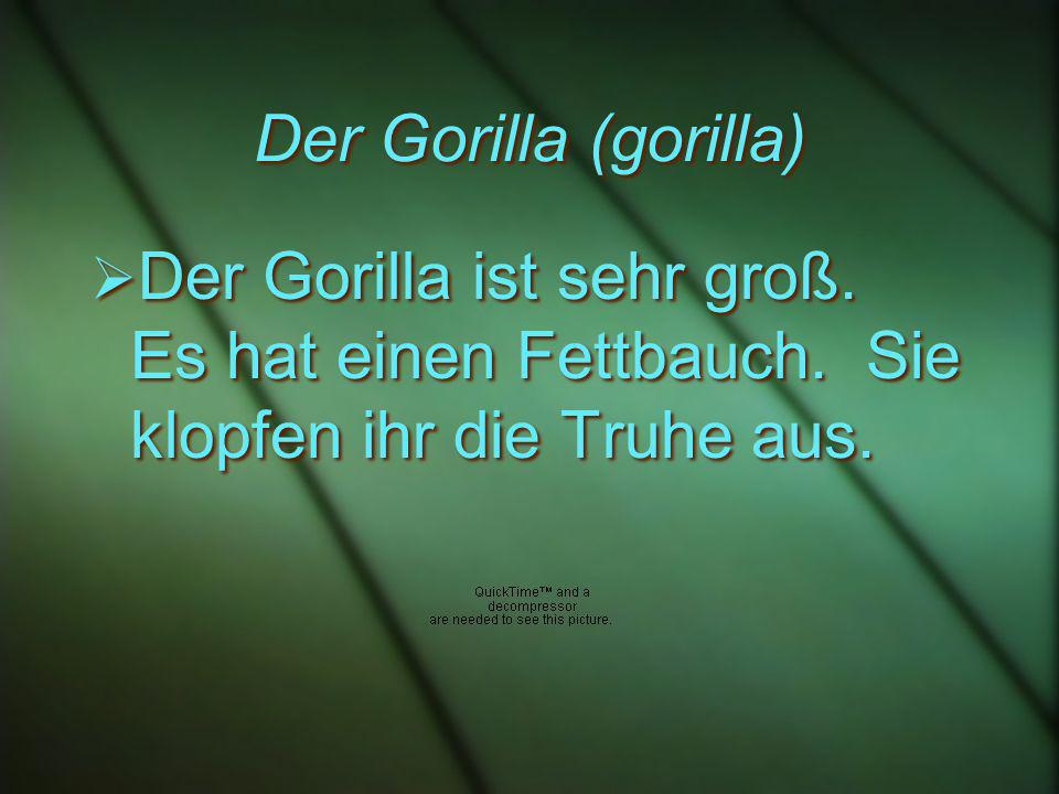 Der Gorilla (gorilla) Der Gorilla ist sehr groß. Es hat einen Fettbauch.