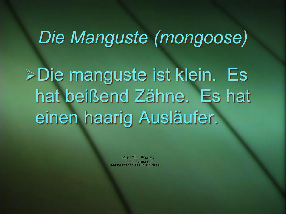 Die Manguste (mongoose) Die manguste ist klein. Es hat beißend Zähne.