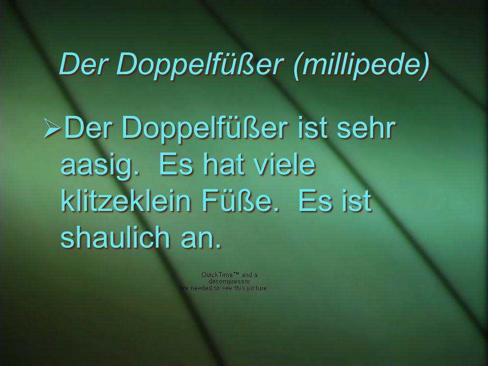 Der Doppelfüßer (millipede) Der Doppelfüßer ist sehr aasig.