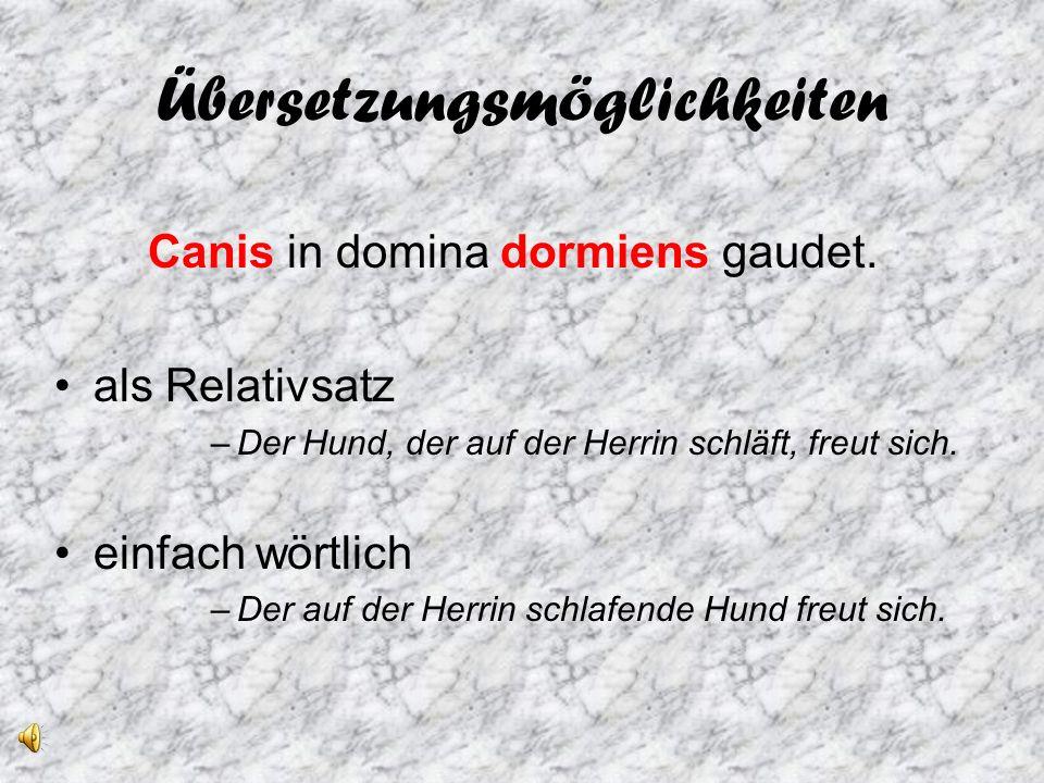 Übersetzungsmöglichkeiten Canis in domina dormiens gaudet.